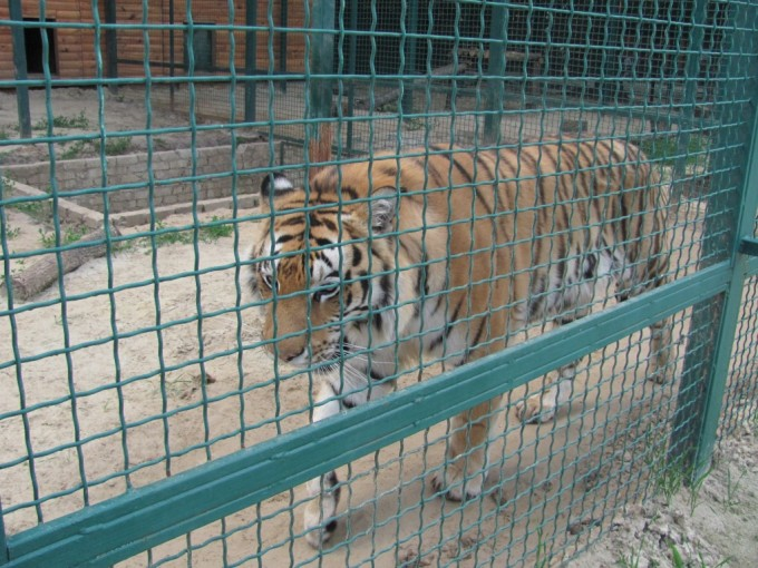 Зоопарк (экопарк) Фельдмана (25)