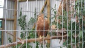 Зоопарк (экопарк) Фельдмана (24)