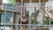 Зоопарк (экопарк) Фельдмана (23)