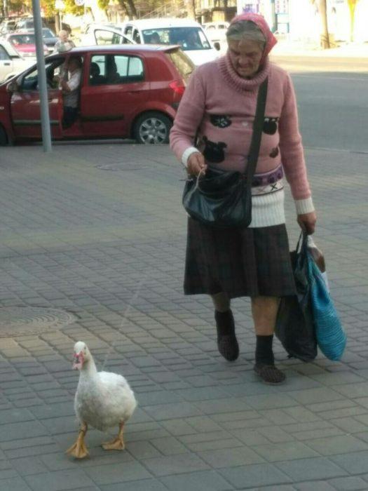 Пенсионерка и гусь в Харькове