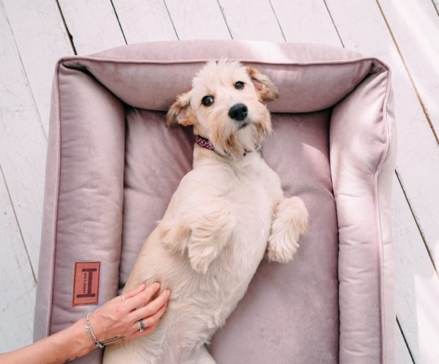 Товары для домашних животных (кошек и собак)