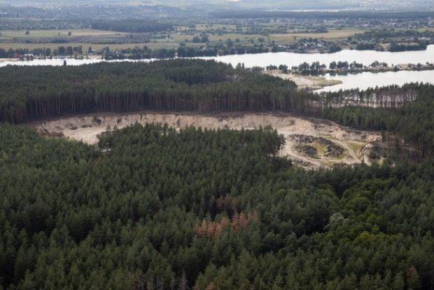 Вырубка леса в Харьковской области