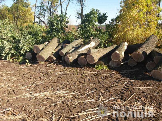 Полицейские Харьковщины выявили факт незаконной порубки деревьев в Валковском районе