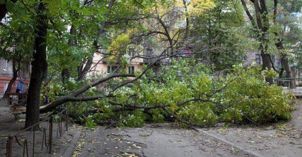 В Харькове из-за непогоды упало три дерева