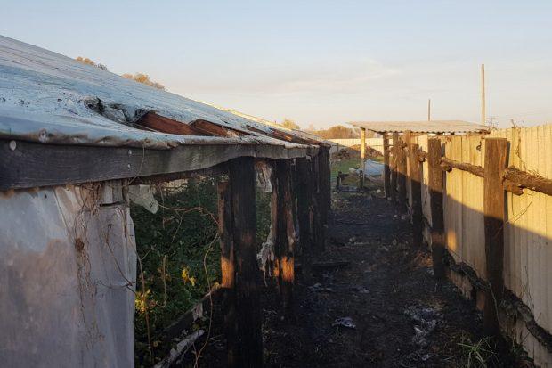 Под Харьковом из-за выжигания сухостоя случился пожар, который едва не уничтожил частную теплицу
